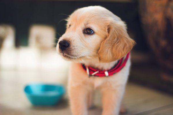 نگهداری سگ در شهرک اکباتان
